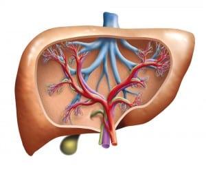 Za wysoki poziom bilurbiny i żólknięcie skóry odpowiada wątroba. Wątróbka noworodka nie jest w stanie rozkładac prawidłowo wszystkich składników krwi, bo jest jeszcze niedojrzała. W ciele odkładają się więc składniki, które dorosły człowiek wydala.