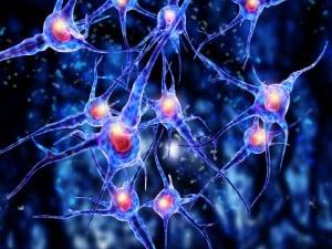 Gospodarka wapniowo-fosforanowa bierze udział w metabolizmie