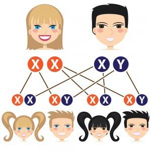 Chromosomy mają wielka moc! Nie tylko czynia z nas męzczyznę lub kobietę, ale decyduja o naszym przyszłym zdrowiu, kolorze skóry, rozmiarze biustu, o tym czy opalamy się ładnie i szybko czy wręcz przeciwnie, czy mamy ręce artysty czy robotnika. hromosom – forma organizacji materiału genetycznego wewnątrz komórki[1]. Nazwa pochodzi z greki, gdzie χρῶμα (chroma, kolor) i σῶμα (soma, ciało).U człowieka występują 22 pary autosomów (ponumerowanych od największego do najmniejszego) i 1 para chromosomów płciowych (u kobiet złożona z dwóch chromosomów X, u mężczyzny z chromosomu X i chromosomu Y