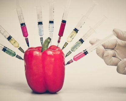 gebetycznie modyfikowane zboża i owoce