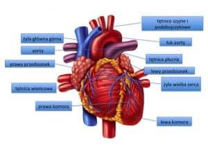 Wady serca u dziecka to każde zaburzenie prawidłowej budowy i funkcji
