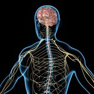 Układ nerwowy wcześniaka jest delikatny.