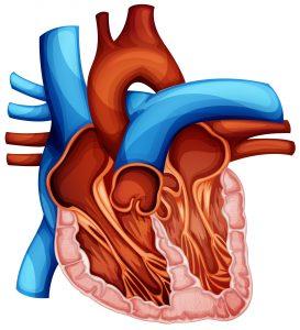 Szmery w sercu nie muszą wiązać się wadą serca.