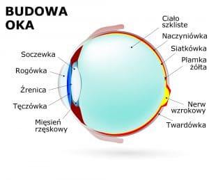 Rozwój oka kończy się mniej więcej, kiedy dziecko osiągnie wiek 10 lat.