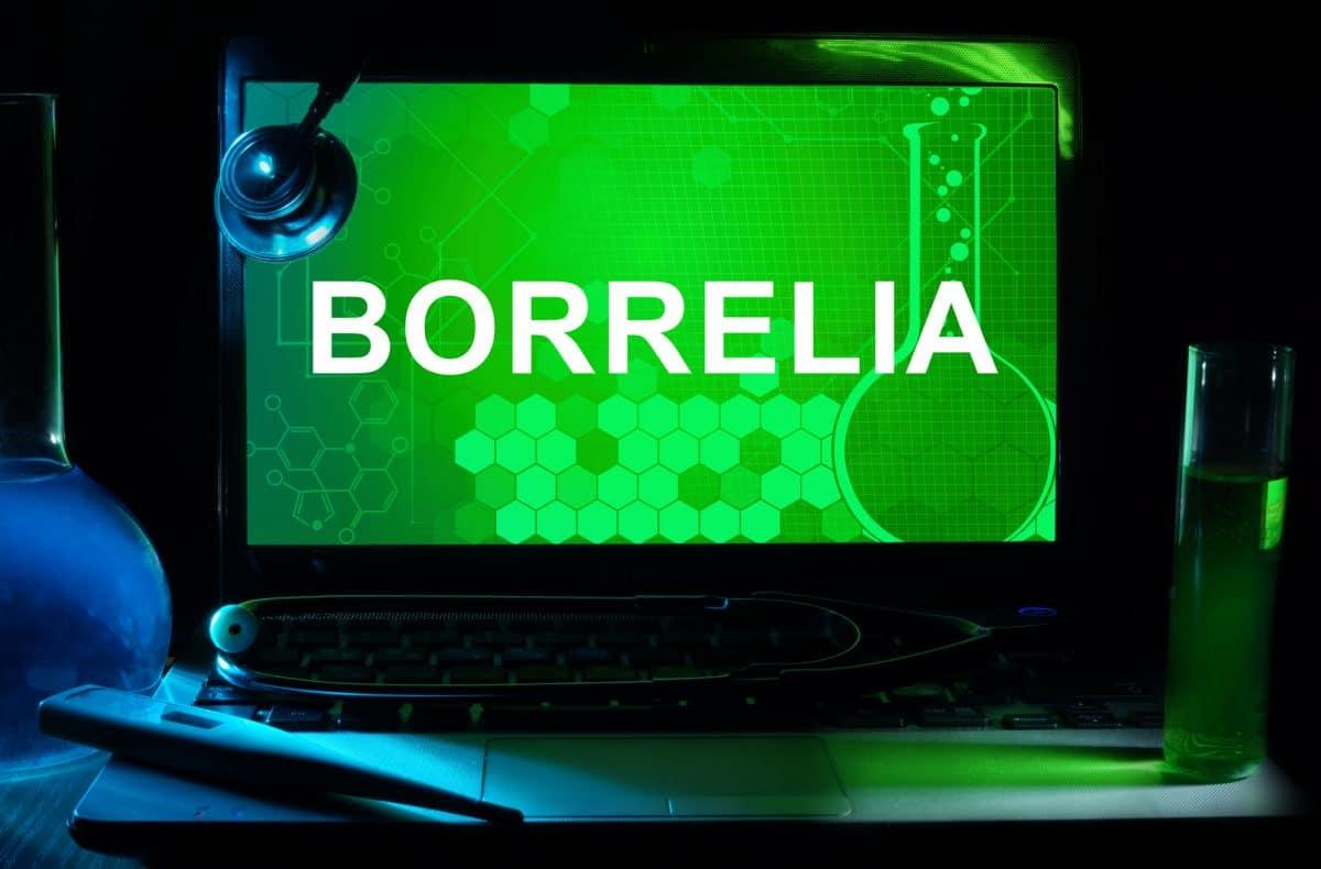 Borrelia - sprytna i podstępna bakteria