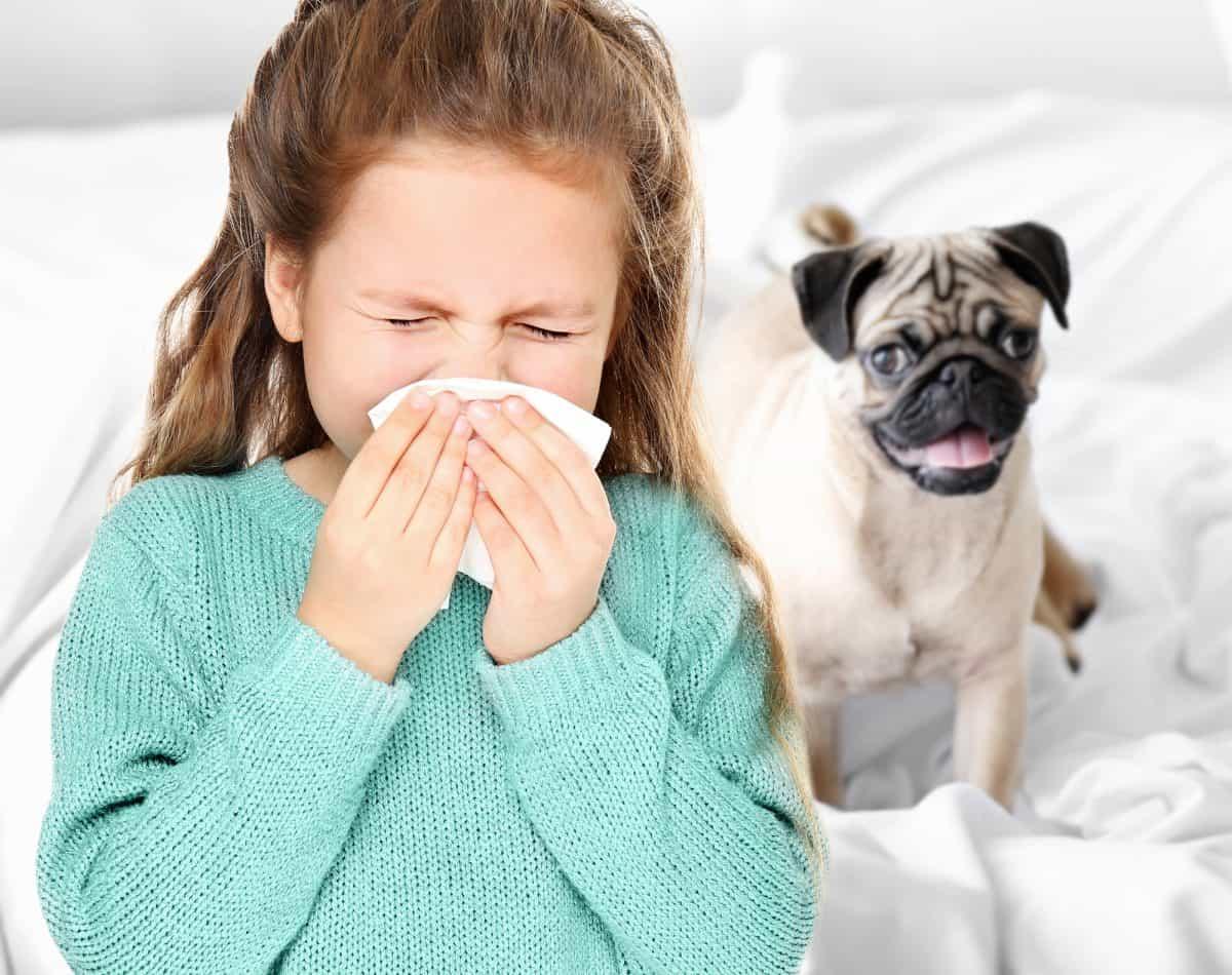 Katar sienny to alergiczny nieżyt nosa.