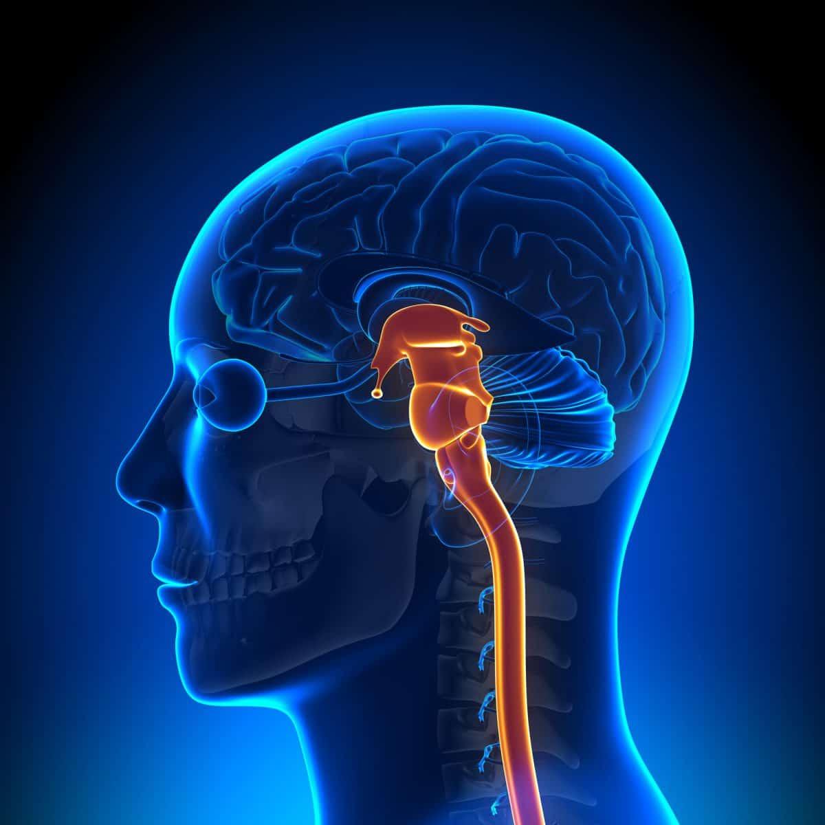 Anatomia a terapia czaszkowo-krzyżowa